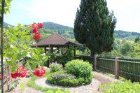 Reben und Rosen in unserem Nutzgarten