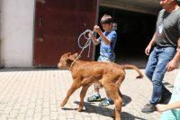 Tiernähe für Kinder und Familie